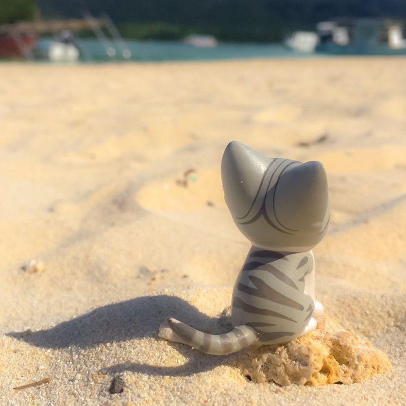 みてみて!ひと足さきにビーチにきたんら。チー、今年こそおよげるように…なう…なう?#こねこのチー #チーズスイートホーム