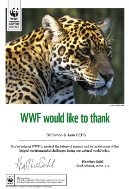 SSSJ have adopted a jaguar with the proceeds of the face painting stall at the summer fair. https://t.co/7amE0S9aSD