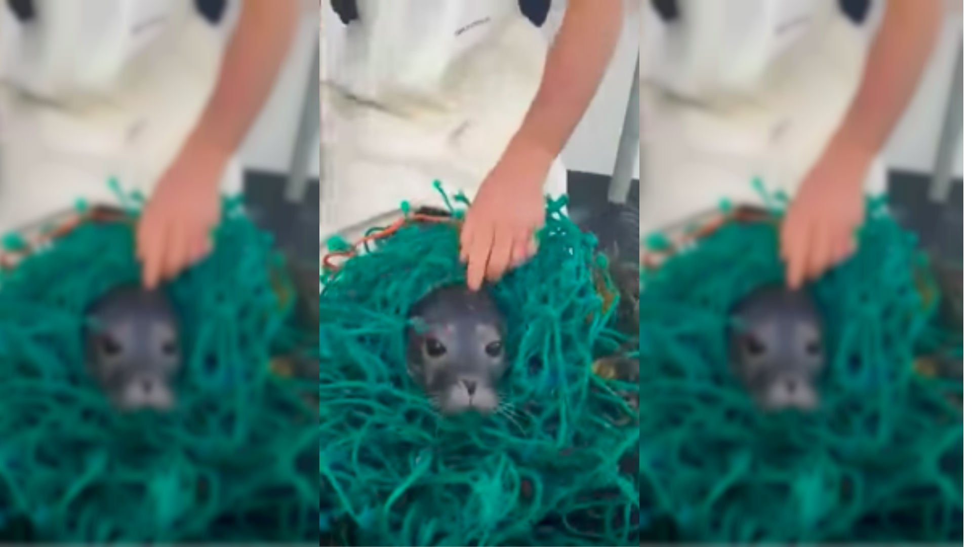 Hero fishermen rescue seal trapped in net https://t.co/dib5nlp6e6 https://t.co/HFVLCbcqU8