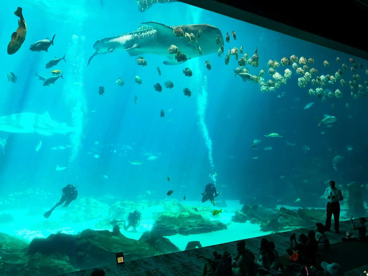 test Twitter Media - Private receptions are better beneath 6.3 million gallons of water, sharks and sting rays in #Atlanta - #EventProfs #DMCLife #Travel https://t.co/0FFFMRQZIa