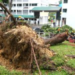 Heavy downpour causes 18m-tall tree to fall on car in Tampines; driver unhurt