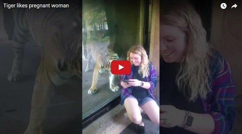 Una embarazada y un tigre viven un tierno momento en un zoo. VER ➡️ https://t.co/QVP7beFdHw https://t.co/POhQJF5Oov