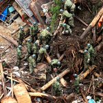 Death toll from torrential rain rises to 7 in northern Kyushu