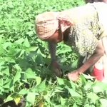 Kenyan farmers' best bet for productivity is innovation
