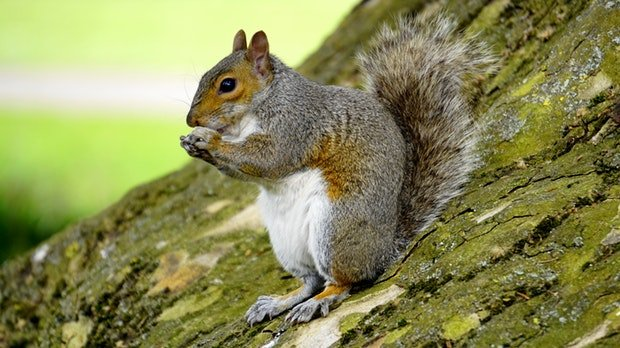 Quebec man petitions provincial government to legalize squirrel hunting