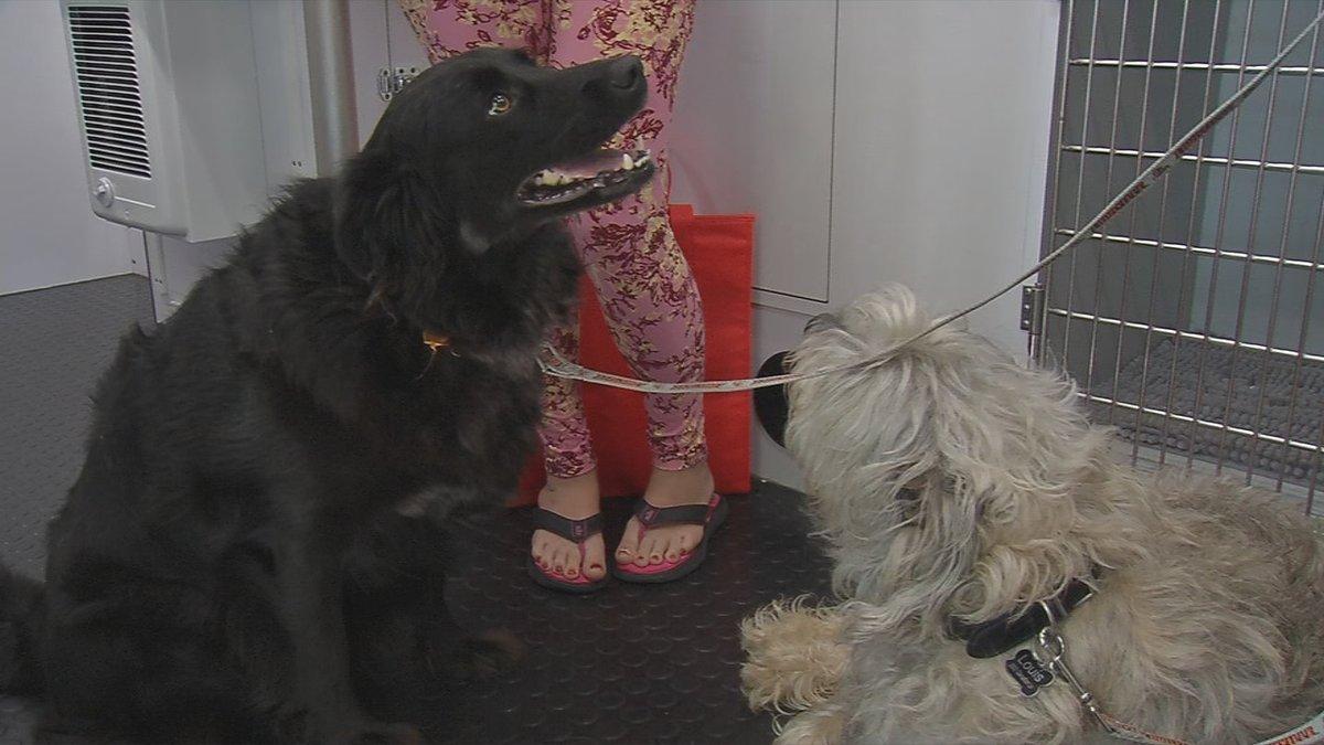 Mobile vet clinic gives dog flu shots at Douglass Loop Farmers Market