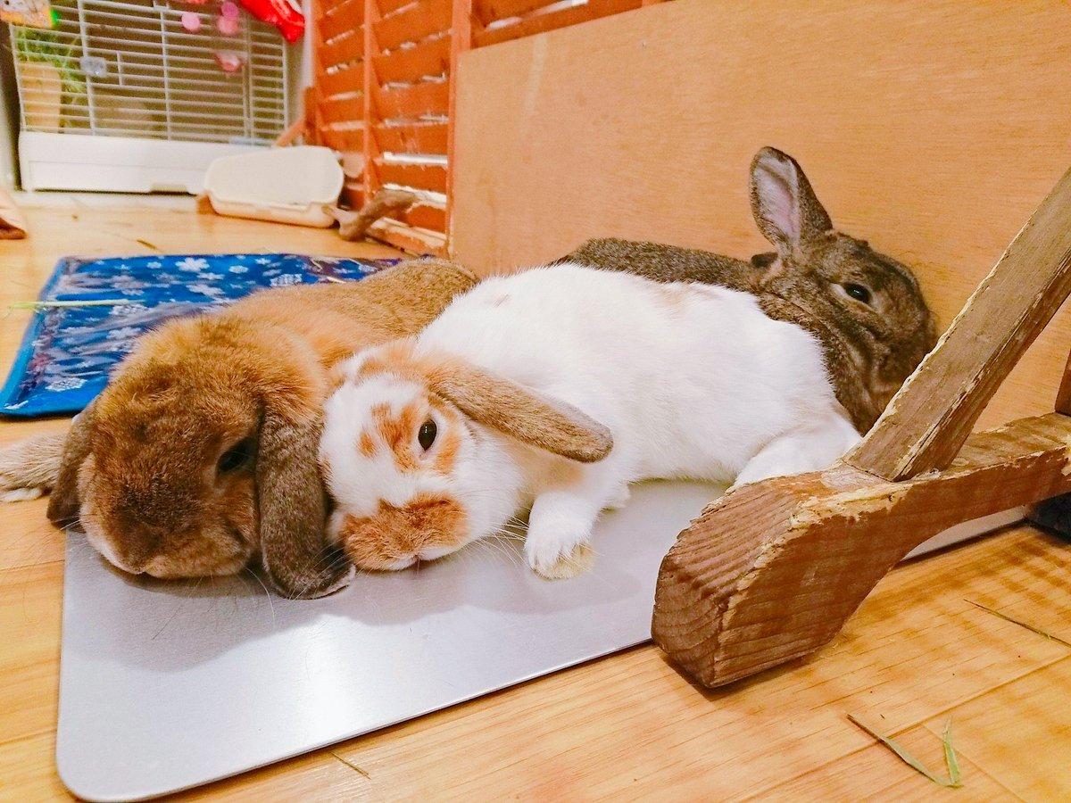 幸せそうな3姉妹🐶🔔👸寝ている時まで一緒にいたい!!本当に可愛いコ達です😙💕💭うるるもそのまま夢の中へいってしまいました