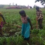 In Madhya Pradesh, Poverty Forces Farmer To Get Daughters To Pull Plough