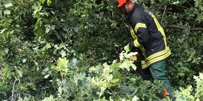 test Twitter Media - Feuerwehr entfernt Baum im Klosterbusch https://t.co/ut2zGIxbRu #feuerwehr #nordhorn #feuerwehrnordhorn #blaulicht https://t.co/qJ5zFl7s2K