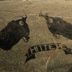 Fire art in SA promotes healthy grasslands