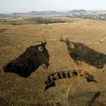 Fire art in South Africa promotes healthy grasslands