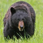 US teen wakes up to find his head is inside a bear's mouth