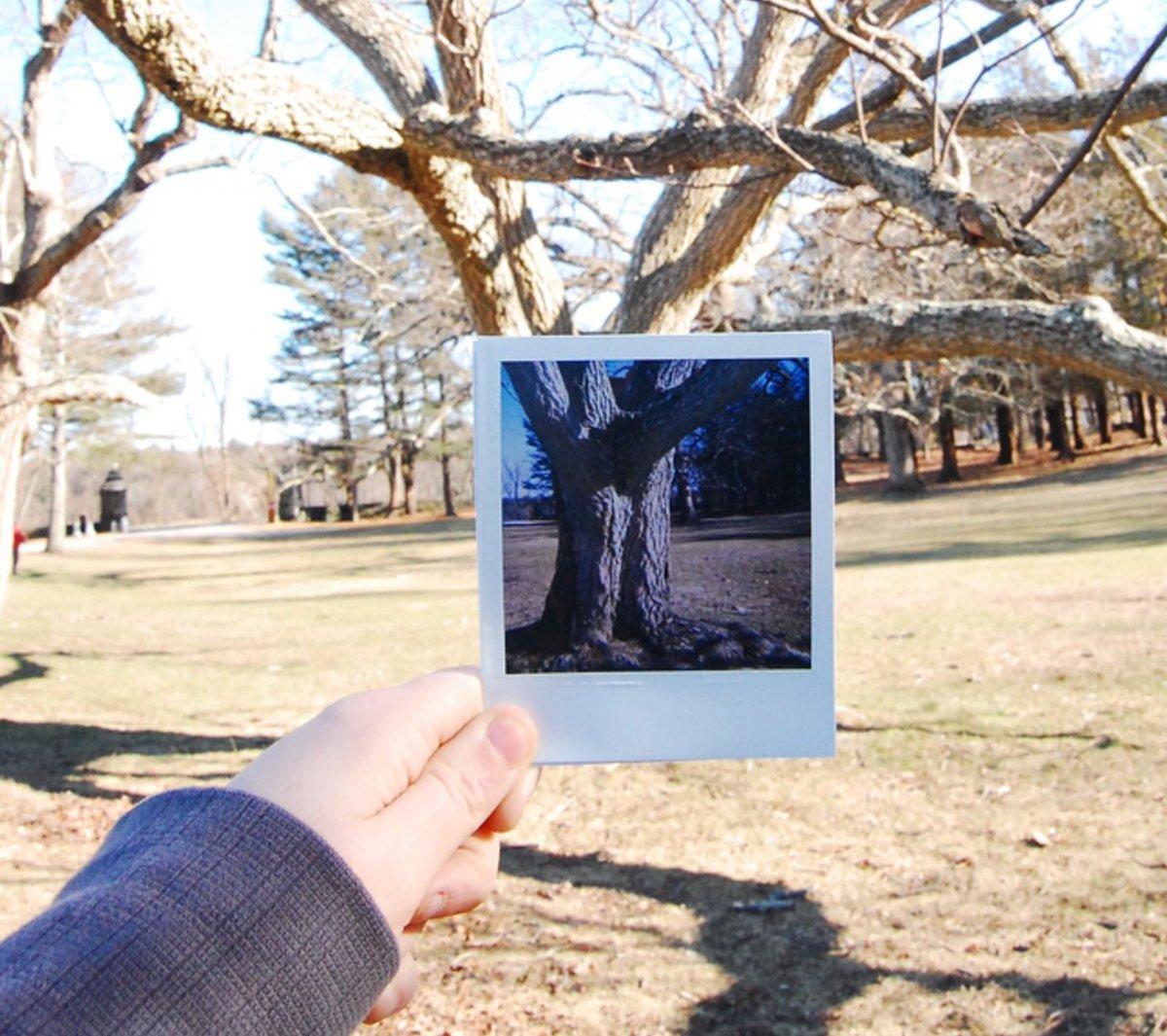 Share all your Polaroid pics here: https://t.co/ABCWFuzTHH https://t.co/vzsvhubv4U