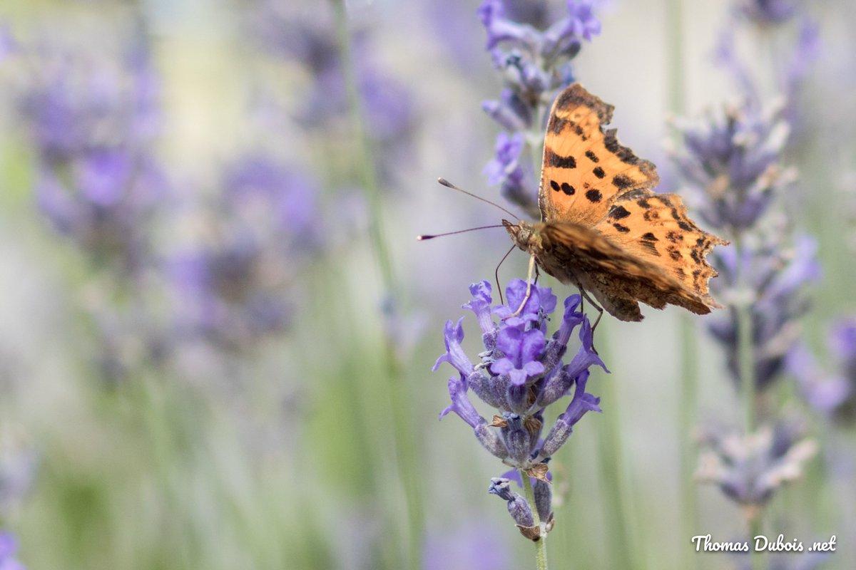 """test Twitter Media - Belle semaine à tous! Quelques photos du weekend """"insectes en vol"""" #photographie #eosnumerique #Ozmoz #concours2017 https://t.co/XVNTcJaSNT"""