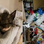 12 kittens and 7 cats die from virus after rescue from cat hoarder at Chua Chu Kang