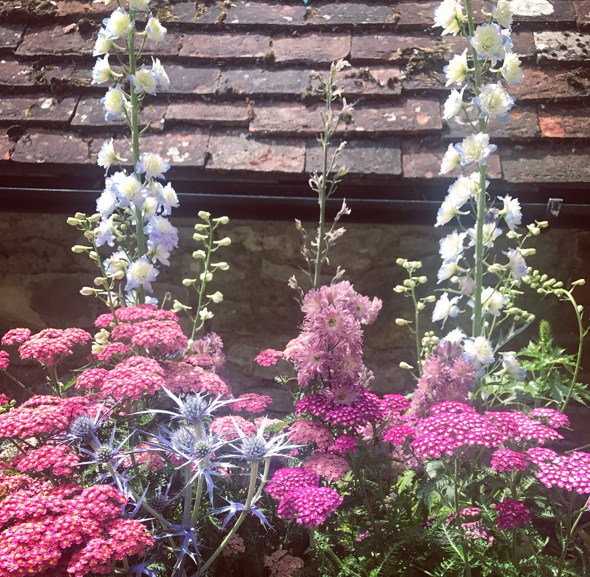 Lovely Delphiniums and the Plant of the moment Sea Holly ???????? https://t.co/aZFpkTh0Yb