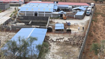 Donkey abattoir accused of failure to comply with public health rules
