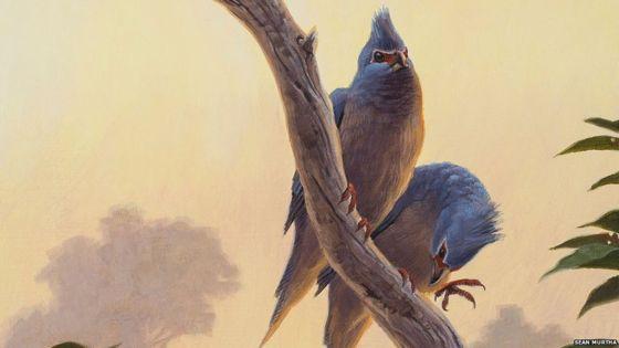 Fossil sheds light on bird evolution after asteroid strike