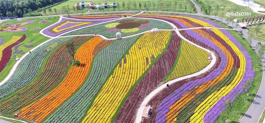 الزهور الملونة