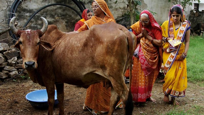 India suspends ban on trade of cattle for slaughter