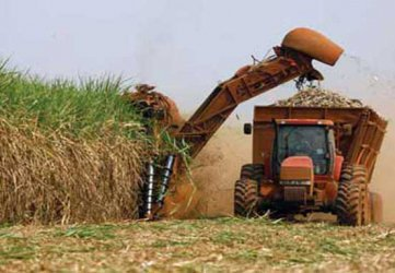 Farmers reap big as cane prices cross Sh4,000 mark