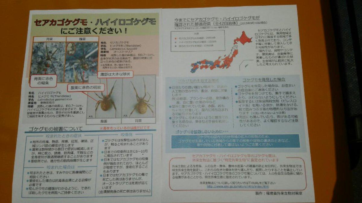 test ツイッターメディア - 7月12日(水) 大安おはようございます。蒸し暑い毎日ですが、今日は少し風があります。こんな日は急な天気の変化に注意が必要ですね。さて昨日はヒアリについて書きましたが、同じく特定外来生物に指定されているセアカゴケグモも危険な生物。千葉県内でも15市内で発見されていますよー! https://t.co/5VOySX38o6