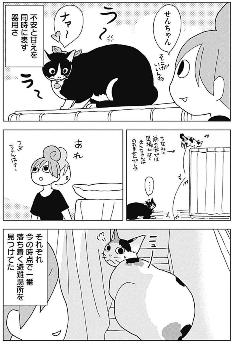 「ワカコ酒」で大ブレイク! 新久千映先生と猫ちゃんたちのエッセイコミック『ねこびたし』第48話が配信! 新居に引っ越しを