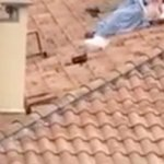 Randy couple risk their lives ROMPING on crumbling rooftop at Pamplona bull run festival
