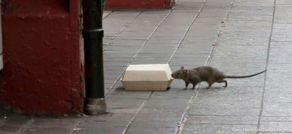 New York City announces $32 million, multi-agency plan to reduce its rat population.