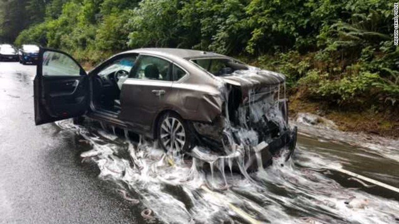 What was to blame for a four-vehicle pileup in Oregon? Slime eels.