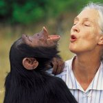 TANAPA awards Jane Goodall for her role in conserving Chimps