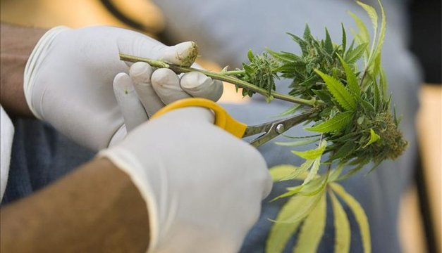 Uruguay empieza venta en farmacias de marihuana de uso recreativo el 19 julio | Diario El Mundo