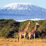 Mt Kili ice loss puzzle deepens