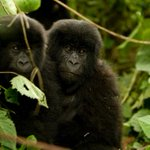 Carbon emissions: Artificial intelligence used to fight deforestation in Congo