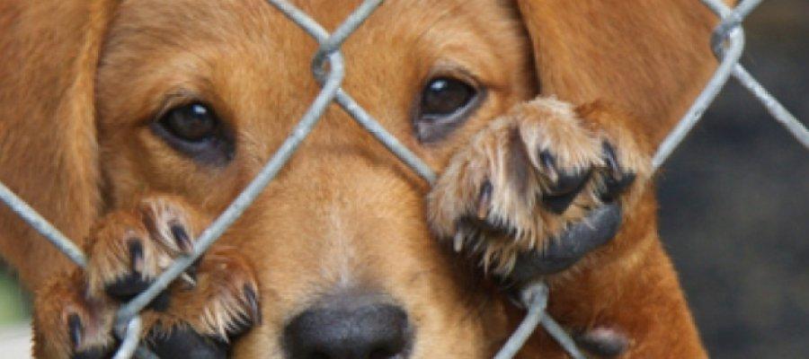 Las protectoras recogieron un total de 104.447 perros y 33.335 gatos en el año 2016