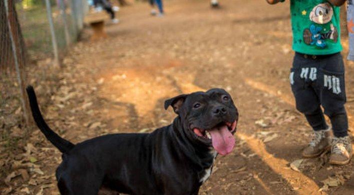 SP Plano para Parque Augusta prevê 'cachorródromo'