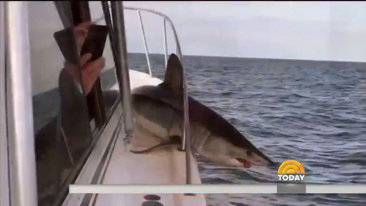 Caught on camera Shark surprises fishing boat crew, jumps out of water and gets stuck in safety railing