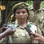 KWS captures lion suspected to have killed a 10yr old school girl in Magarini