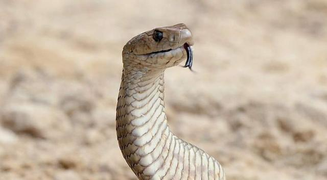 Indore Woman, daughter hospitalised after they ate snake with cabbage!