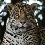 Brazil's other wild place -- the Pantanal