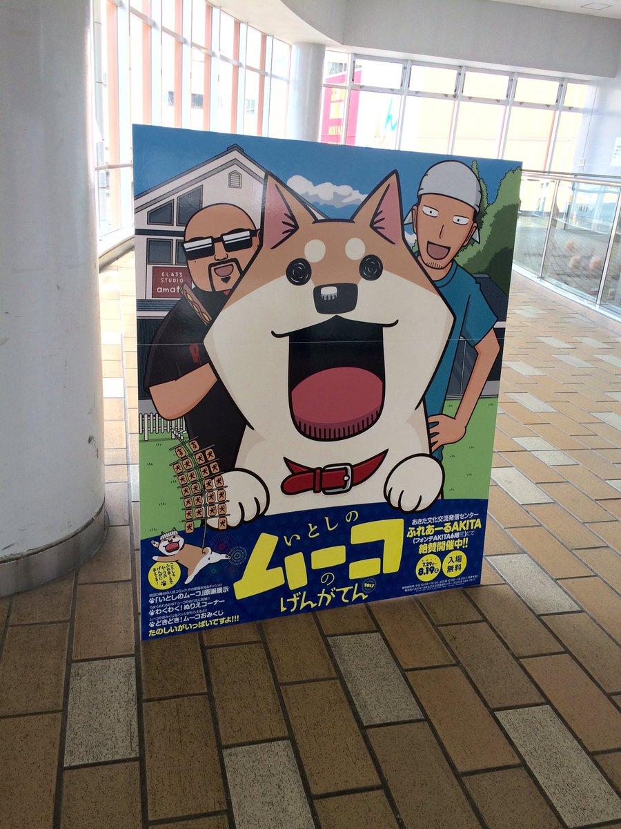 JR秋田駅の連絡通路ぽぽろ〜ど西口には今年もムーコパネルが!秋田空港にもあるよ!#犬 #ムーコ #秋田 #サイン会