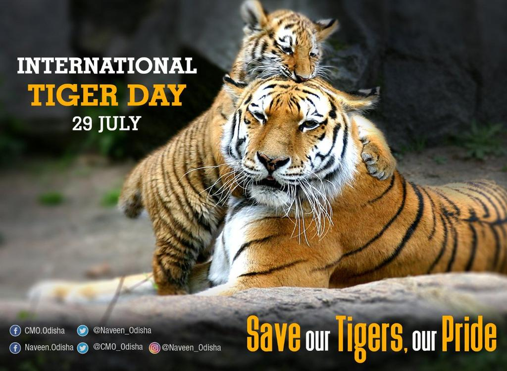 RT @gagansoni9602: SAVE our TIGERS, SAVE our PRIDE. SAVE TIGER, SAVE HUMANITY. #InternationalTigerDay #SaveTiger https://t.co/C9nTluIbbo