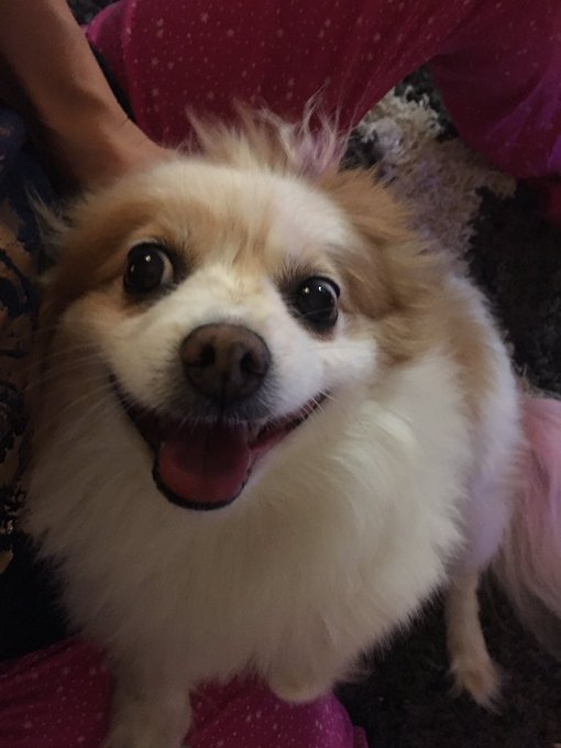 @thecadencelux May I suggest @KenMarRescue? They helped me find my little angel! #AdoptDontShop https://t