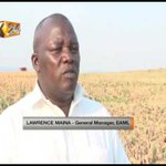 EABL pilots growth of a new sorghum variety following launch of Kisumu plant