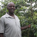 Coffee farmers struggle to recover losses