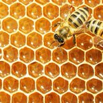 Global research center set to offer bee health expertise globally: official