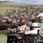 Drawn by wildebeest, tourists pour into Kenya despite possible election violence