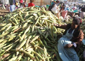 Smart Harvest: Farmers want government to control consumption of green maize