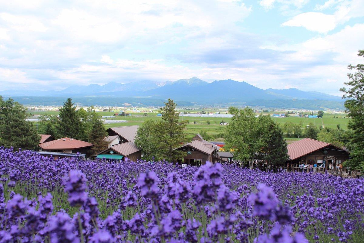 北海道。富良野ラベンダー畑、美瑛の丘、函館の夜景、洞爺湖(天体のメソッド)。