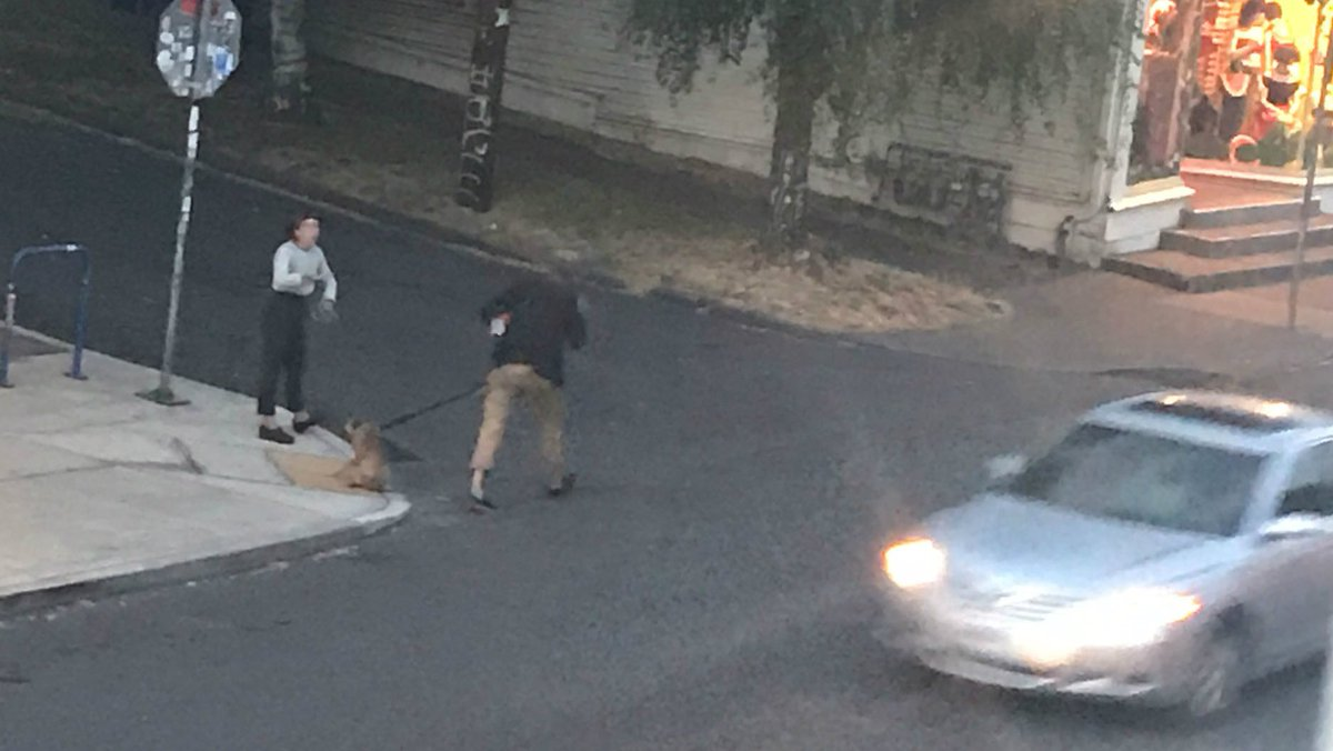 Alleged dog abuse caught on camera in Southeast Portland